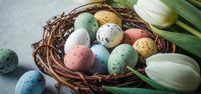 Jaja przepiórcze – jak włączyć je do wielkanocnego menu? | Artykuł Winiary