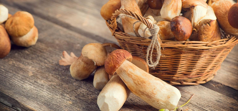 Jak obgotować grzyby i co z nich zrobić? | Porady i inspiracje Winiary