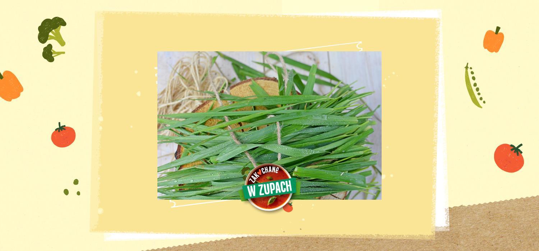 Trawa żubrowa – aromatyczny dodatek kulinarny ZWZ WINIARY
