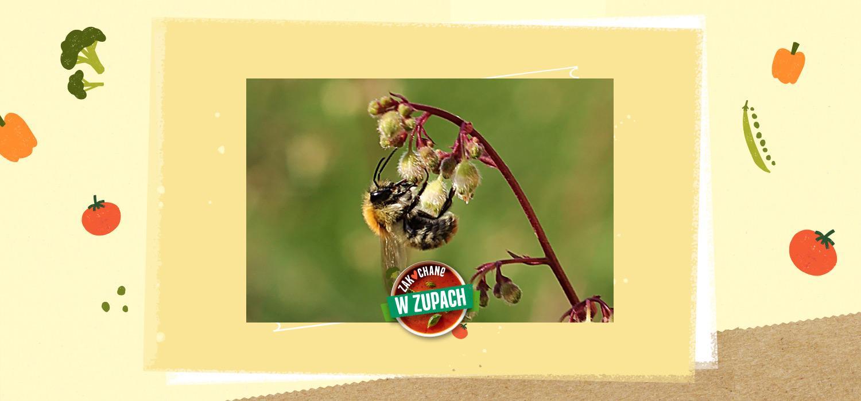 Małe co nieco o pszczołach i miodzie ZwZ WINIARY