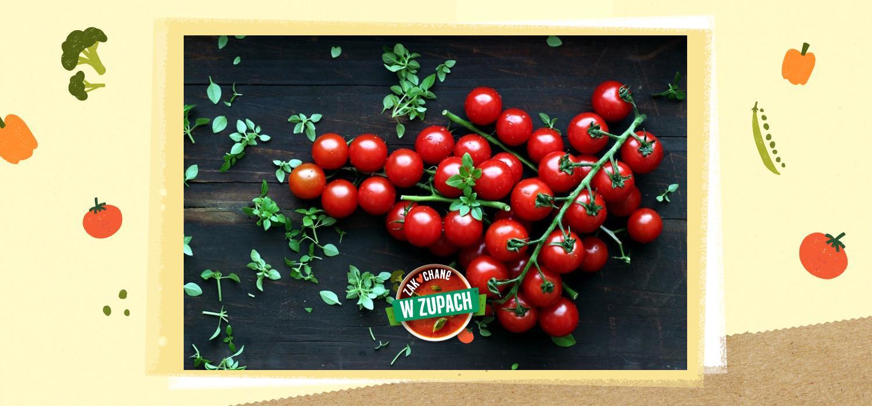 Pora na pomidory – wszystko, co warto wiedzieć WINIARY ZwZ